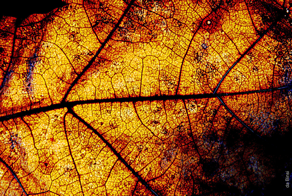 A Fall Equinox Playlist Perfect for Magick Making
